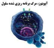 آپوپتوز، مرگ برنامه ریزی شده سلول